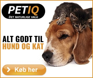 Alt godt til hund og kat